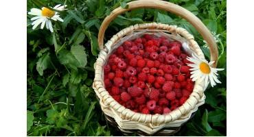 Секреты выращивания малины!