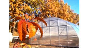 Почему покупать теплицу осенью выгоднее